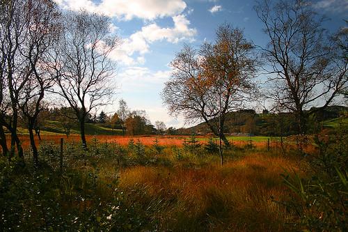 landscapes_5_20130312_1338873901