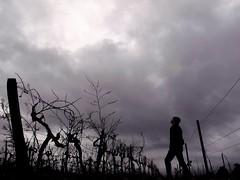 De la viña al cielo (por Adeline)