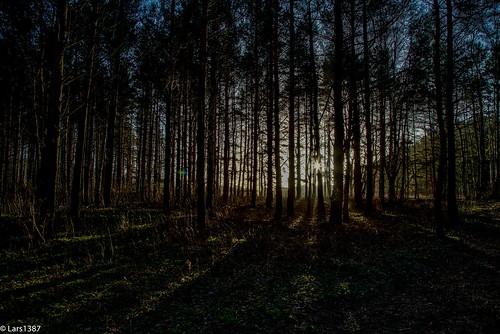 trees sun sunlight tree nature norway canon woods sunburst 6d sandefjord vestfold canon6d oloneo oloneophotoengine