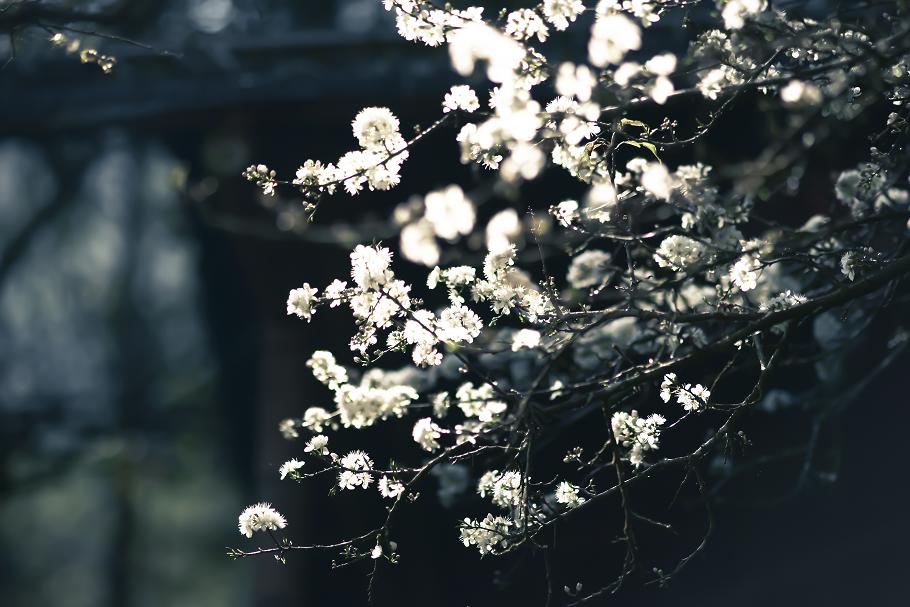 http://littleprince612.blogspot.tw/2014/02/blog-post.html