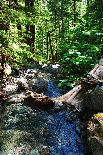 Upper Myra Falls Trail, Strathcona Provincial Park, Central Vancouver Island, British Columbia, Canada