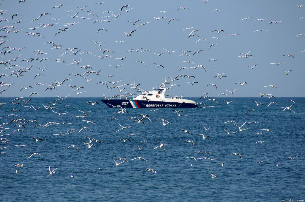 Береговая охрана и чайки