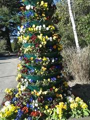 Kings Heath Park - flowers pots