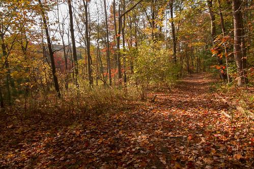 autumn fall nayaugpark