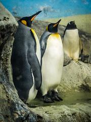 Standing tall - Riverbanks Zoo, Columbia, SC