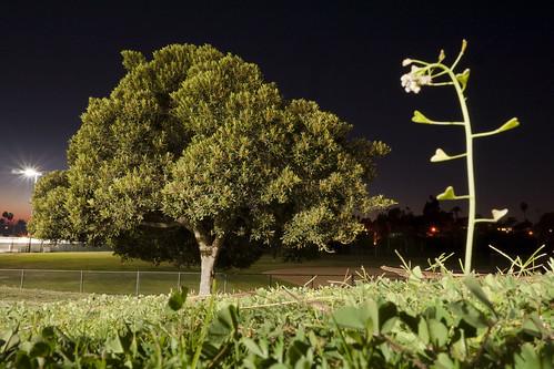 tree night landscape lumix panasonic gh1 lumix14mmf25