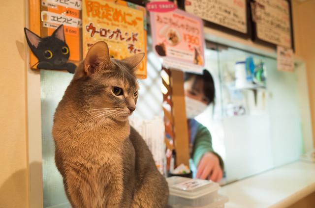 猫カフェ~ねこ・JaLaLa~