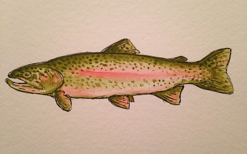 watercolor rainbow trout 2.0