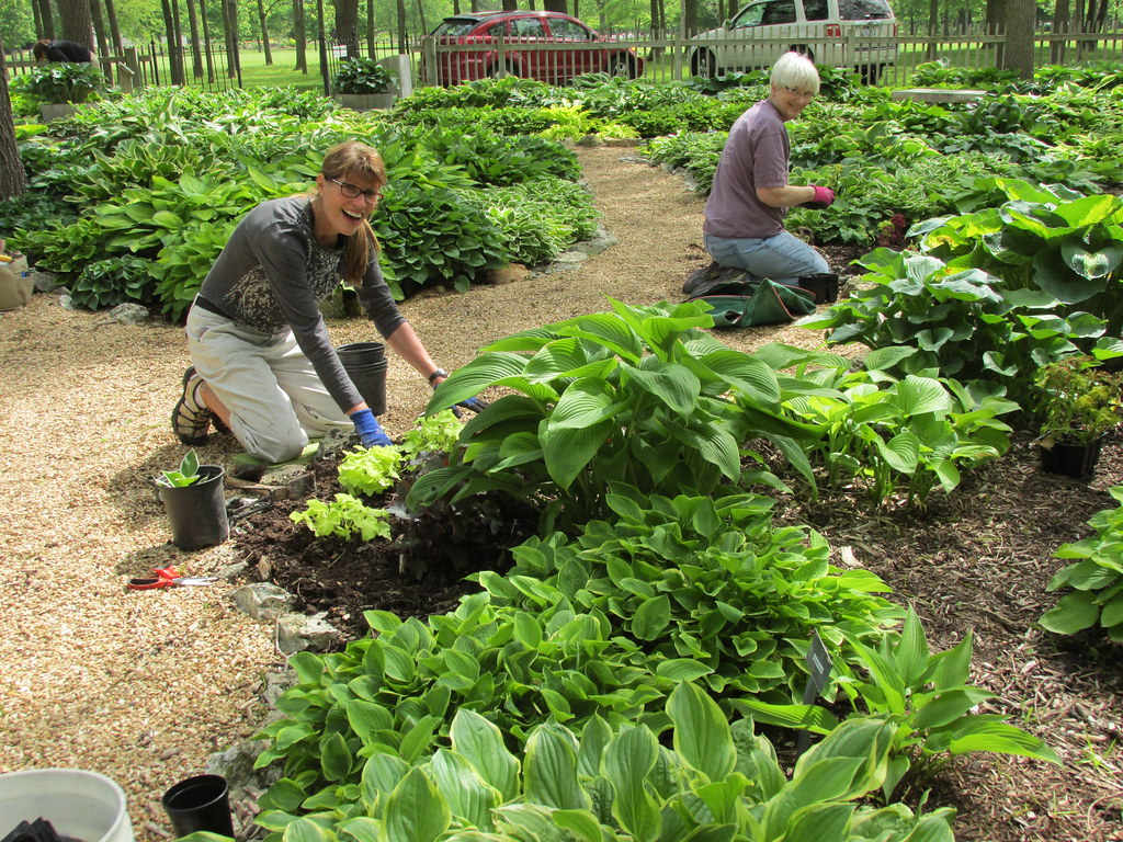 Volunteers Enjoy The Day Planting Hostas In The Garden In May, 2014  Volunteers Enjoy The Day Planting Hostas In The Garden In May, 2014 ...
