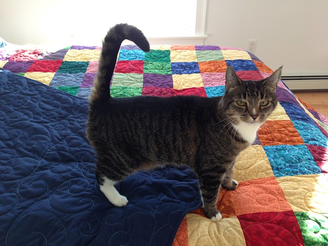 Santana on the finished quilt