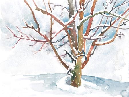 20150203_winter-tree-snowing_web