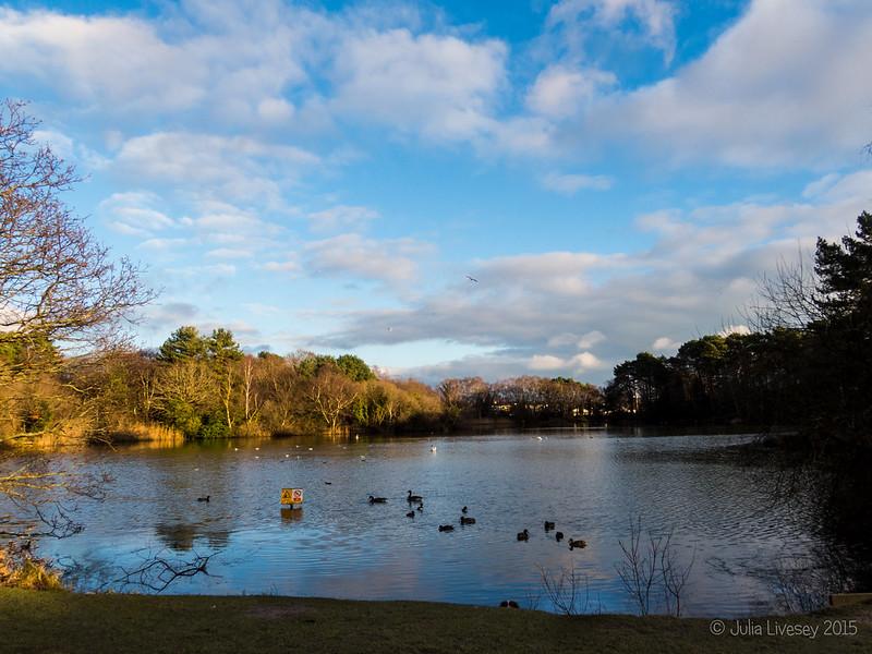 Creekmoor Ponds