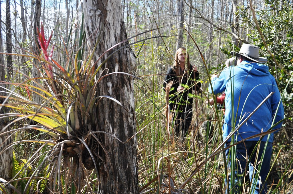 Getting Educated on the Bald Cypress Forest During a Swamp Walk with Clyde Butcher's Big Cypress Gallery