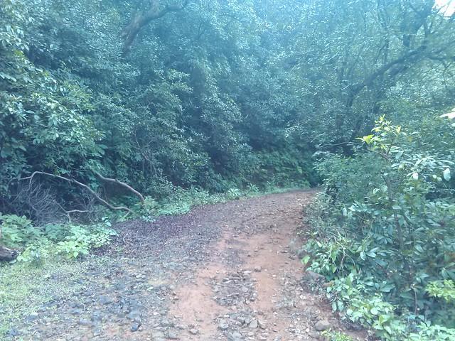 Road to Kudpan from kumathe
