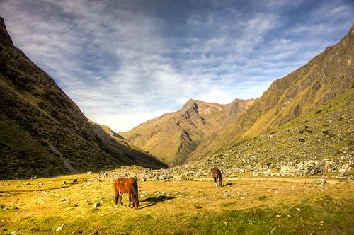 horse peru southamerica nikon hiking tamron hdr mammalia nikond700 283003563