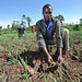 Capturing intensive horticulture activities in Lower Nyando, Kenya