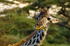 Tanzania-Masek-SafariDrive-46