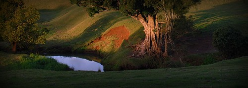 sunset plants nature pool creek countryside scenery roots australia erosion bark nsw trunk treebark sunsetlight lateafternoon eroded myrtaceae syzygium redsoil ruralaustralia northernrivers rurallandscape corndale australiantrees bareearth australianrainforesttrees creekscape syzygiumfrancisii giantwatergum franciswatergum danscreek basalticalluvium