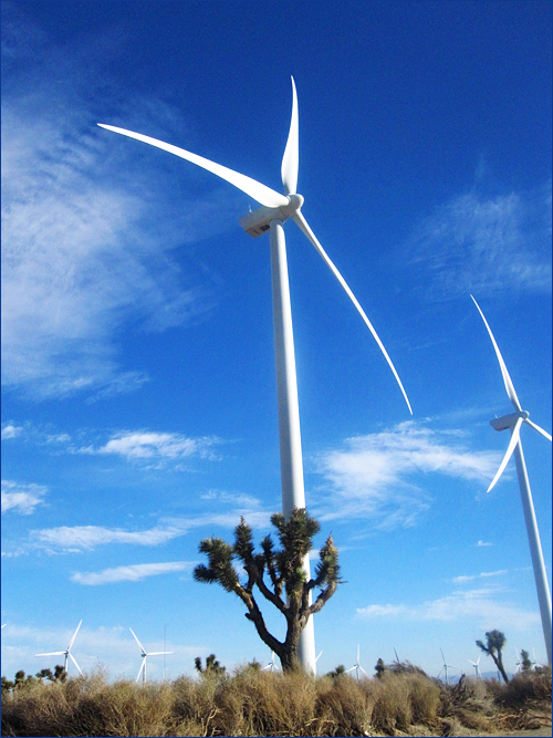 windmilljoshuatree