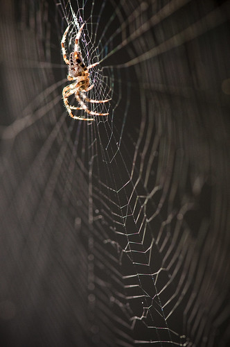 spider by petetaylor