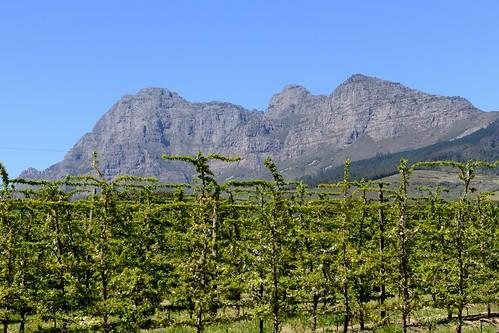 southafrica franschhoek nikkorafs2470mmf28ged d800e