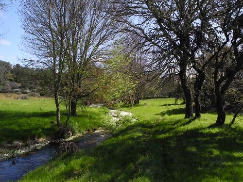 Bosque de rivera
