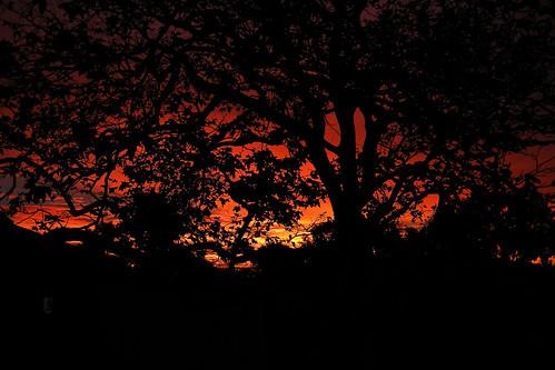 MY `GOOD MORNING` SUNRISE DSCN9951