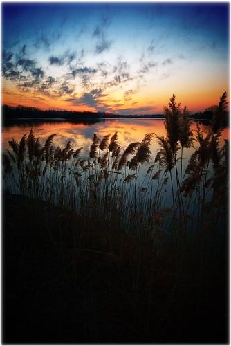 sunset lake reflection niagara grasses gibson