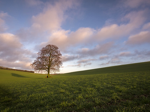 tree field landscape lumix countryside day cloudy bluesky olympus panasonic lone lonely grad beech hertfordshire dmc herts decorum m43 mft gnd gh3 leefilters nettleden damianward ©damianward micro43 microfourthirds 918mm mzuikodigitaled soft06