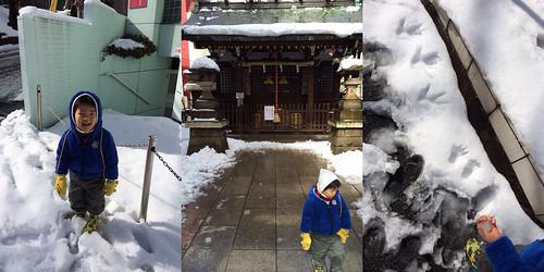 大雪の翌日のとらちゃん 2014/2