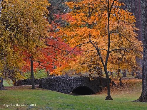 bridges washingtonstate naturewatcher nikonflickraward cannonhillparkautumnfallspokane
