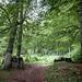 En el interior del bosque