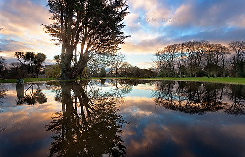 trees reflections guernsey channelislands sausmarezpark