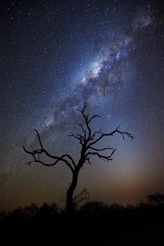 africa tree silhouette night stars landscape southafrica safari afrika astronomy rsa mpumalanga milkyway gamedrive timbavati starfield republicofsouthafrica motswari timbavatiprivatenaturereserve greaterkrugernationalpark motswariprivategamereserve bignigrescens