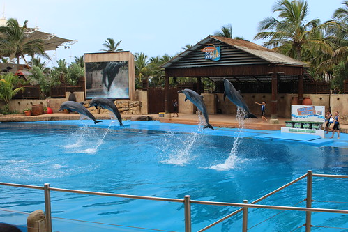 uSharka Dolphin Display