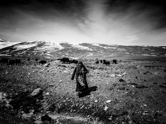 Shirren Lim - .[the] yak herder.