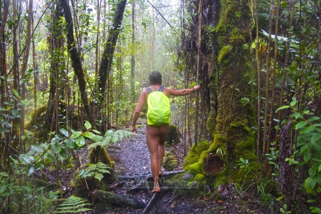 naturist 0001 Ka-hau-a-Le'a tree fern trail, Hawaii, USA