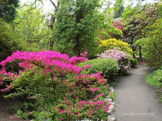 Bezienswaardigheden Wales Top 10 - Clyne Gardens Swansea volop in bloei in mei
