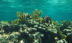 Grand Cayman's barrier reef