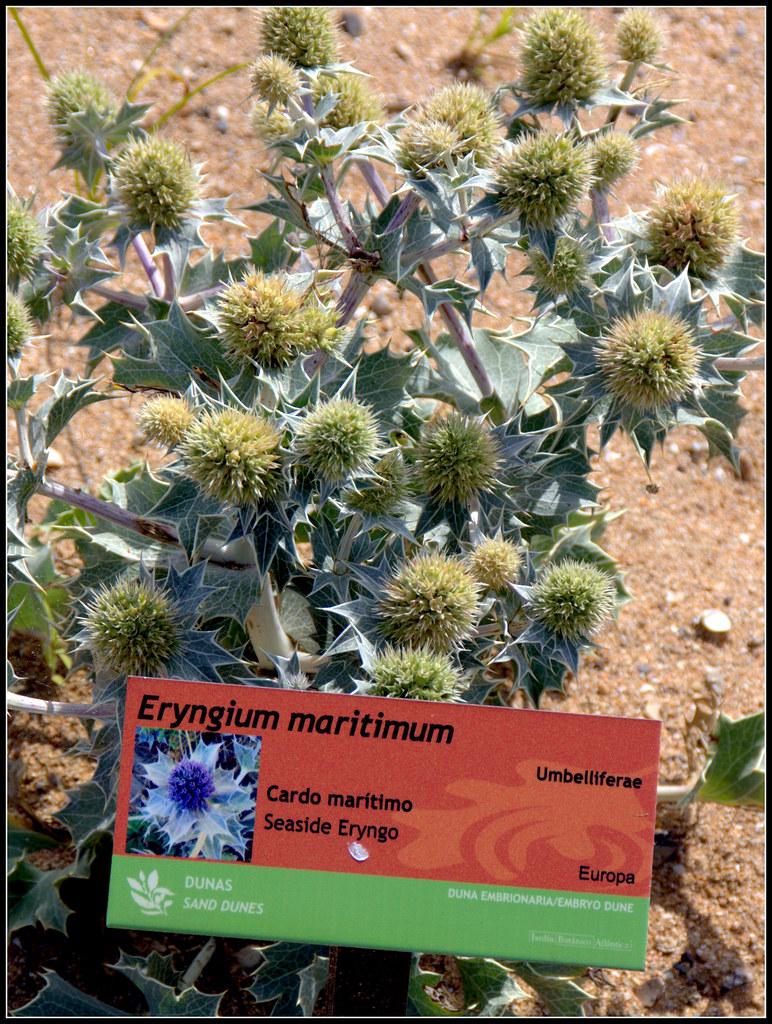 ¿De dónde sacas los nombres de las plantas?