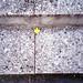 Un fiore in bocca può servire sai by Minchioletta