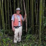 bamboo+in+South+Carolina