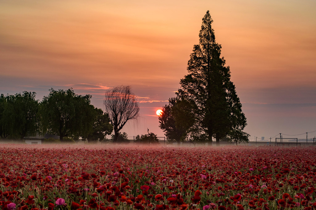 太陽が出てきたあけぼの山農業公園