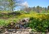 Springtime @ Holden Arboretum