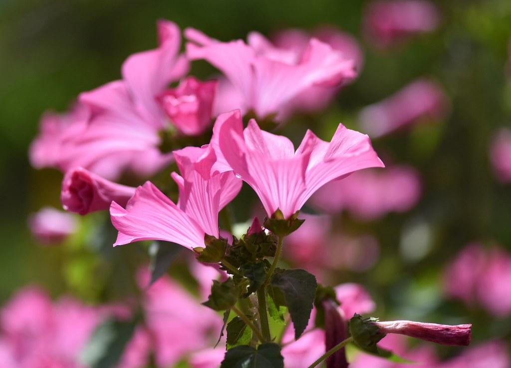 Bloemen gefotografeerd in Palheiro Gardens (Madeira)