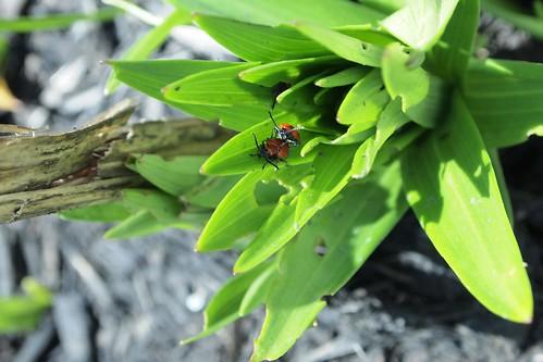 spring's lutheran bug dance