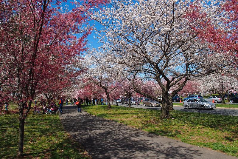 Branch brook park|New Jersey