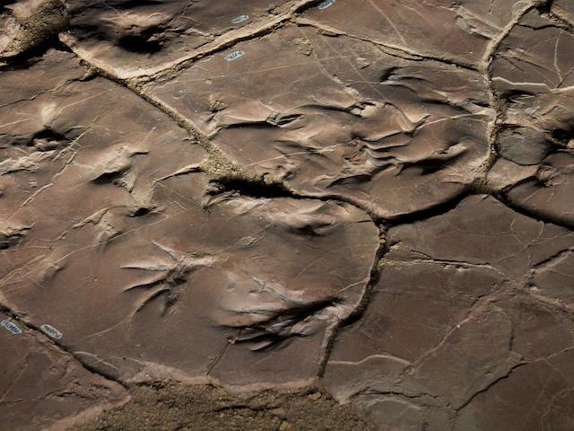Permian Tracks