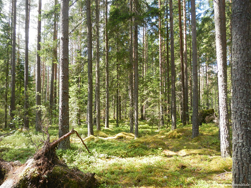 park nature forest nikon national coolpix kansallispuisto aw100 helvetinjärvi toughcamera helvetinjärven