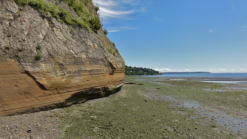 South Bluff, Discovery Park, June 2013
